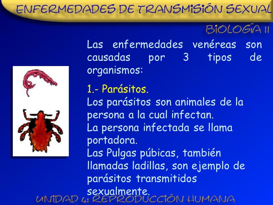 La clamidia, es causada por una bacteria y es la enfermedad bacteriana mas común.