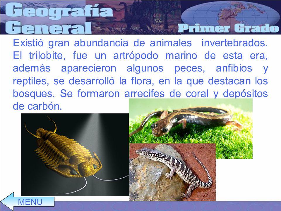 Existió gran abundancia de animales invertebrados.