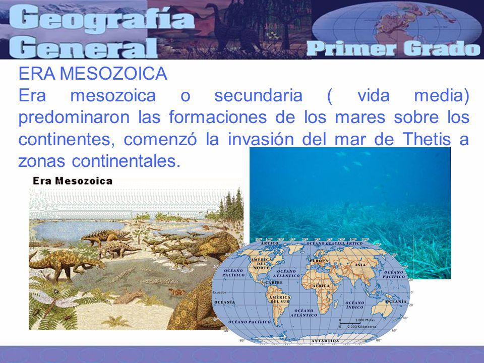 ERA MESOZOICA Era mesozoica o secundaria ( vida media) predominaron las formaciones de los mares sobre los continentes, comenzó la invasión del mar de Thetis a zonas continentales.