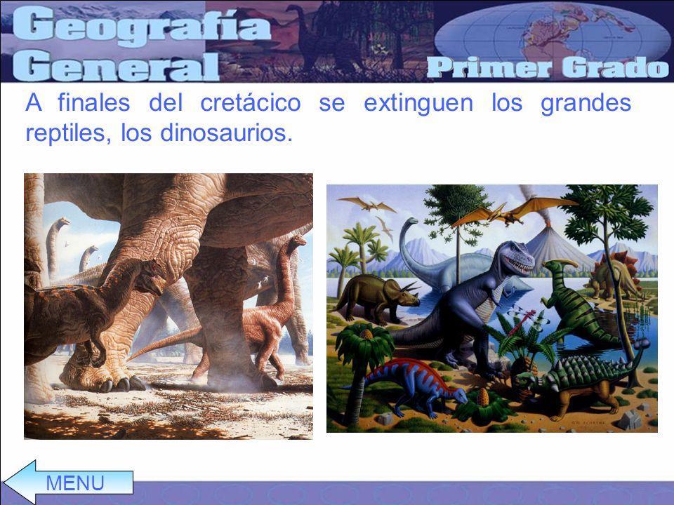 A finales del cretácico se extinguen los grandes reptiles, los dinosaurios. MENU