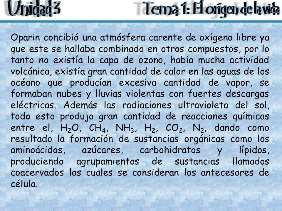 Oparin concibió una atmósfera carente de oxígeno libre ya que este se hallaba combinado en otros compuestos, por lo tanto no existía la capa de ozono,