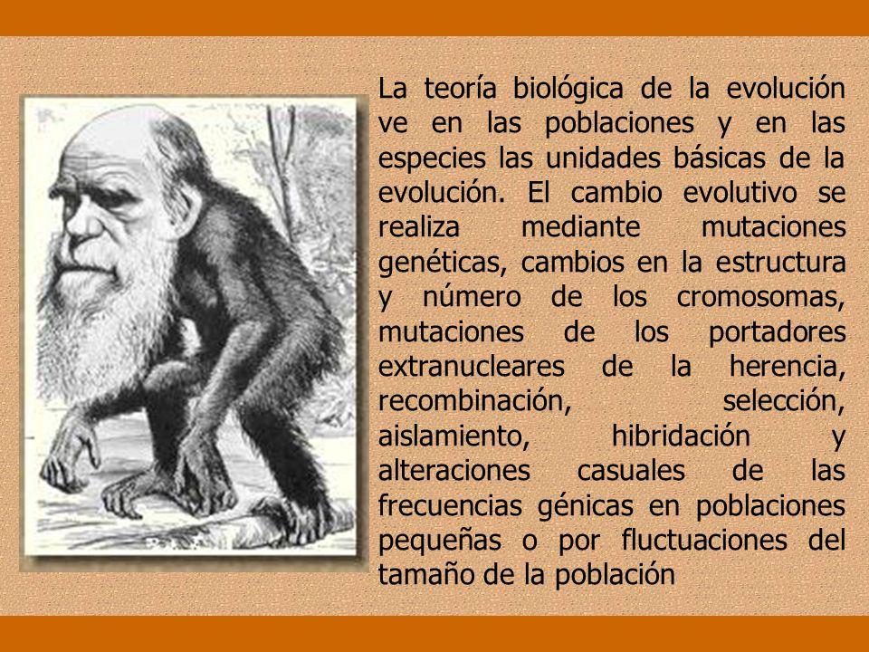 La teoría sintética de la evolución actual se apoya en la teoría darwinista de la selección, en los conocimientos de la genética y del tratamiento mat