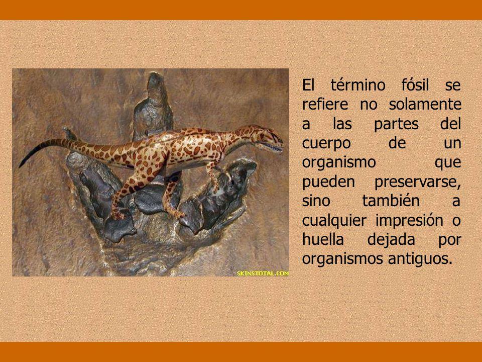 El estudio de los restos fósiles no sólo ofrece argumentos a favor del cambio y modificación (evolución) sufrida por antecesores de las especies actua