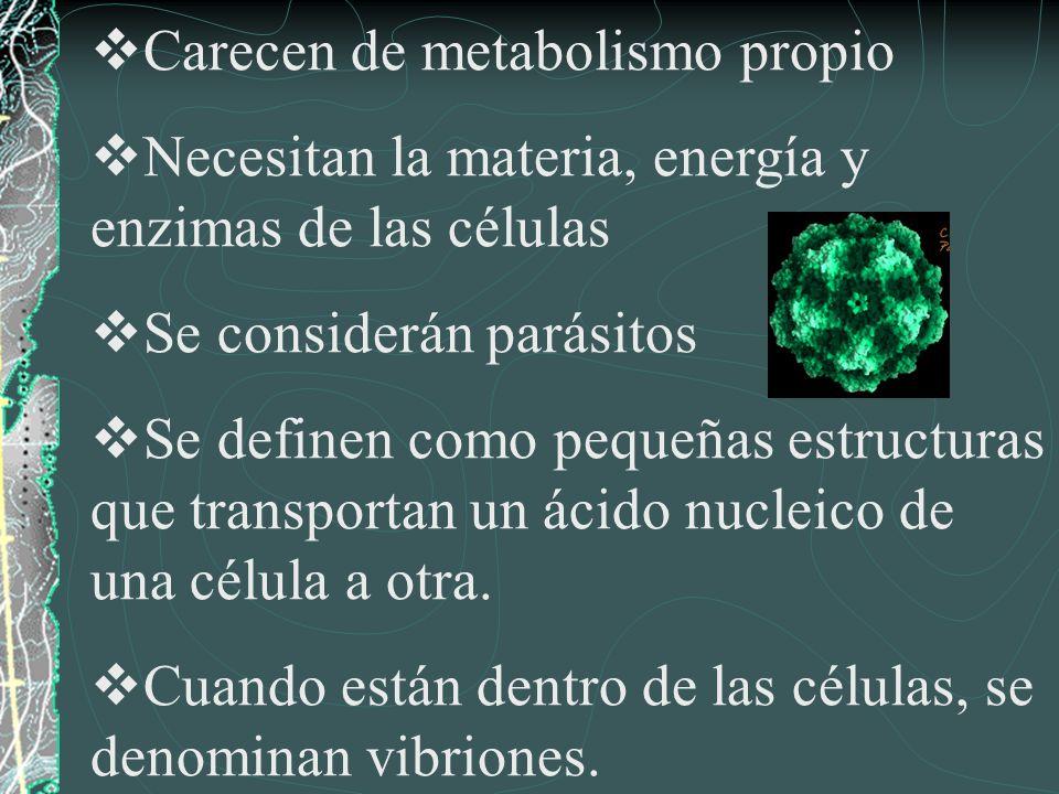 Carecen de metabolismo propio Necesitan la materia, energía y enzimas de las células Se considerán parásitos Se definen como pequeñas estructuras que