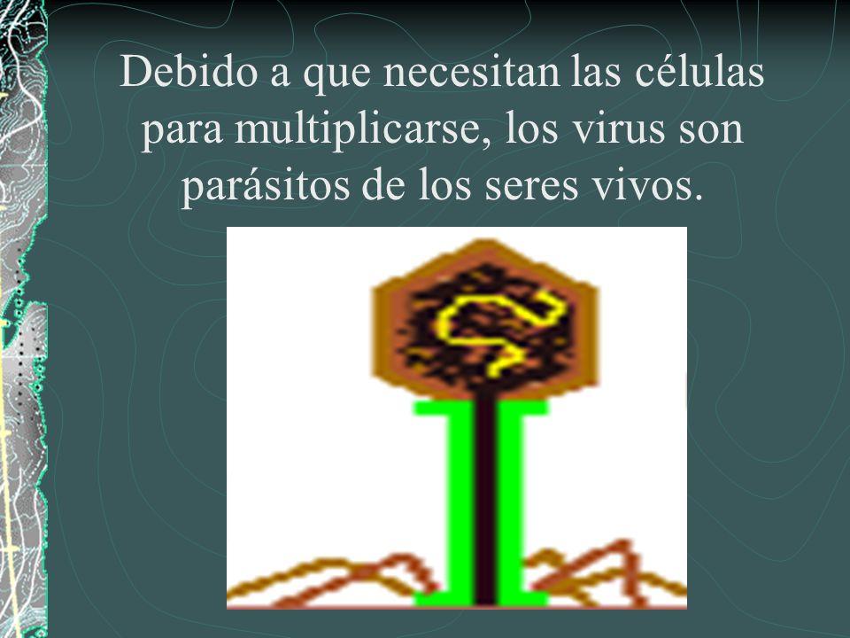 Debido a que necesitan las células para multiplicarse, los virus son parásitos de los seres vivos.