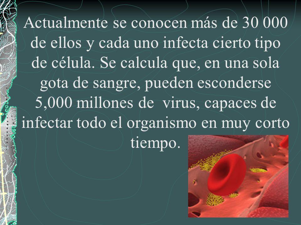 Actualmente se conocen más de 30 000 de ellos y cada uno infecta cierto tipo de célula. Se calcula que, en una sola gota de sangre, pueden esconderse