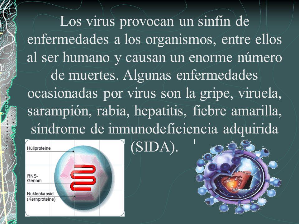 Los virus provocan un sinfín de enfermedades a los organismos, entre ellos al ser humano y causan un enorme número de muertes. Algunas enfermedades oc