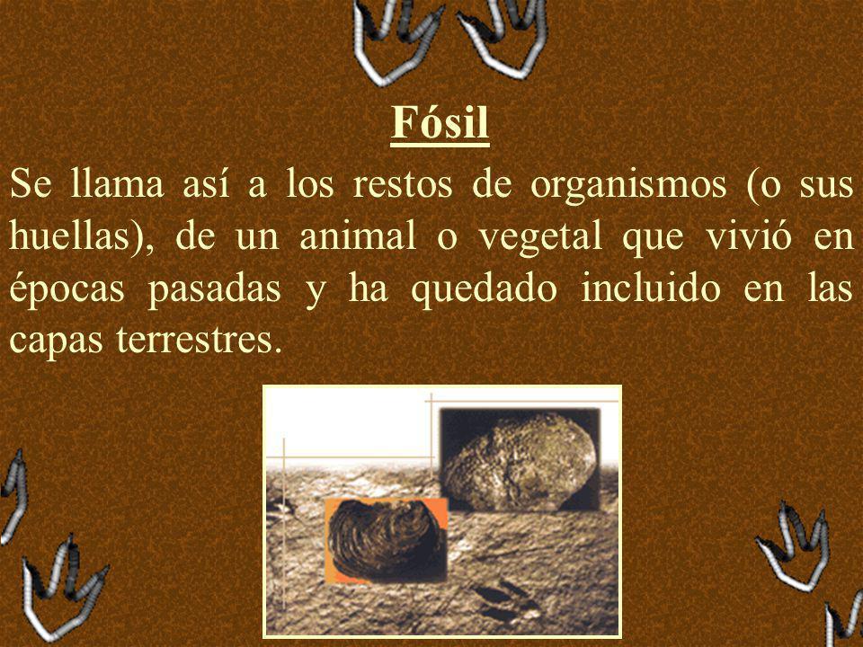 Fósil Se llama así a los restos de organismos (o sus huellas), de un animal o vegetal que vivió en épocas pasadas y ha quedado incluido en las capas terrestres.
