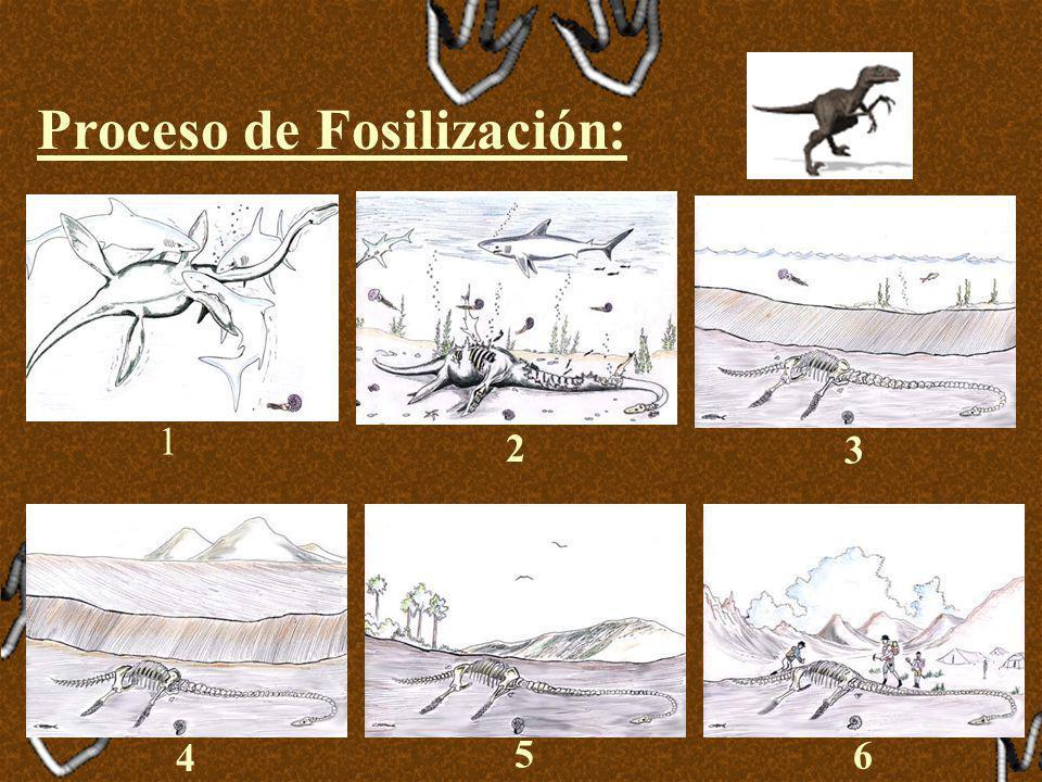 Fosilización Es el conjunto de procesos físico-químicos, que sufre un organismo desde que muere hasta que el paleontólogo lo encuentra como fósil en l