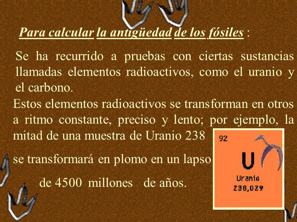 Estos elementos radioactivos se transforman en otros a ritmo constante, preciso y lento; por ejemplo, la mitad de una muestra de Uranio 238 se transformará en plomo en un lapso de 4500 millones de años.