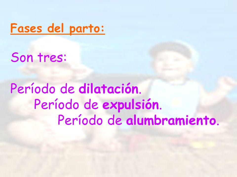 Fases del parto: Son tres: Período de dilatación. Período de expulsión. Período de alumbramiento.