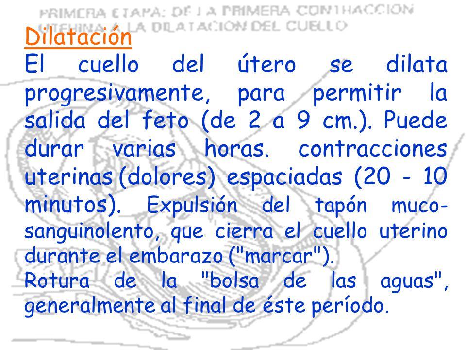 Dilatación El cuello del útero se dilata progresivamente, para permitir la salida del feto (de 2 a 9 cm.). Puede durar varias horas. contracciones ute
