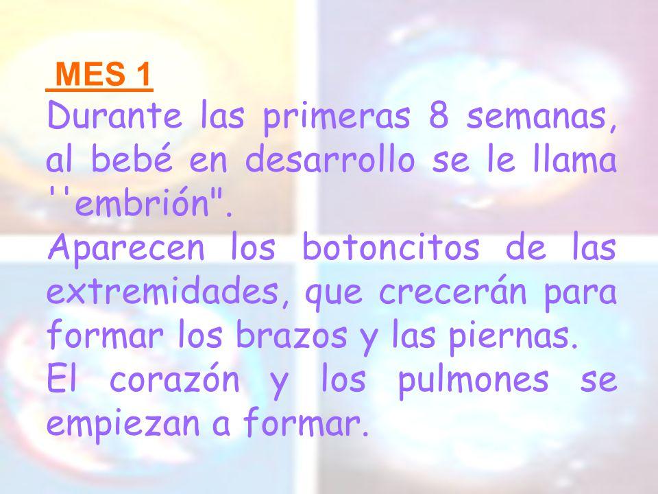 Dilatación El cuello del útero se dilata progresivamente, para permitir la salida del feto (de 2 a 9 cm.).
