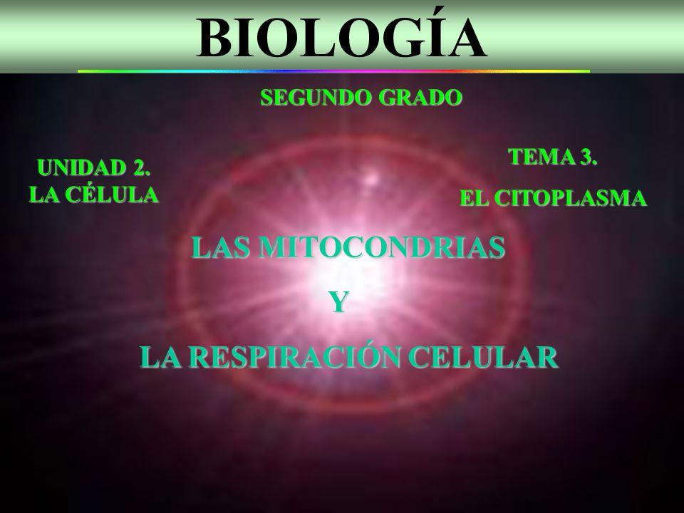BIOLOGÍA SEGUNDO GRADO UNIDAD 2. LA CÉLULA TEMA 3. EL CITOPLASMA LAS MITOCONDRIAS LAS MITOCONDRIAS Y LA RESPIRACIÓN CELULAR