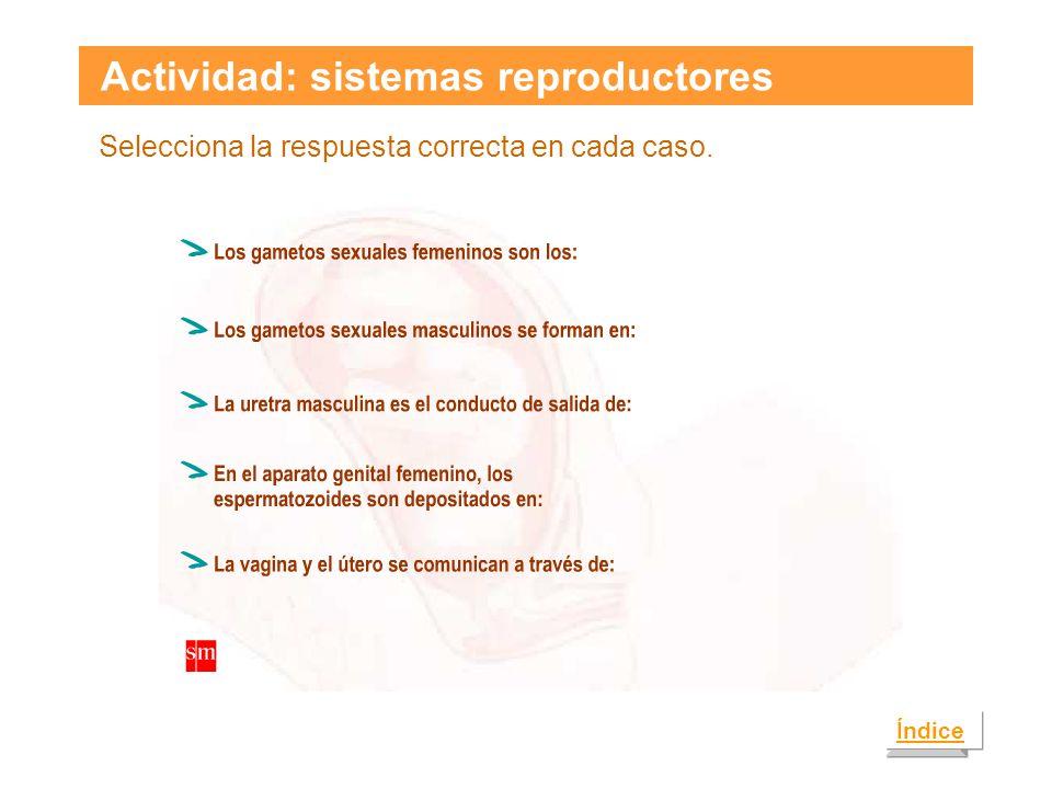 Actividad: sistemas reproductores Selecciona la respuesta correcta en cada caso. Índice
