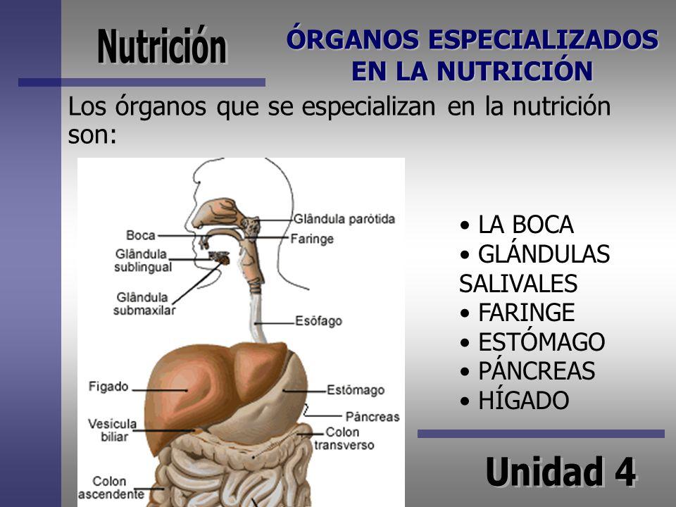 ÓRGANOS ESPECIALIZADOS EN LA NUTRICIÓN Los órganos que se especializan en la nutrición son: LA BOCA GLÁNDULAS SALIVALES FARINGE ESTÓMAGO PÁNCREAS HÍGA