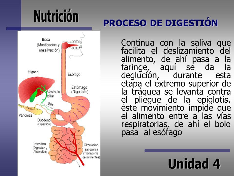 PROCESO DE DIGESTIÓN Continua con la saliva que facilita el deslizamiento del alimento, de ahí pasa a la faringe, aquí se da la deglución, durante est