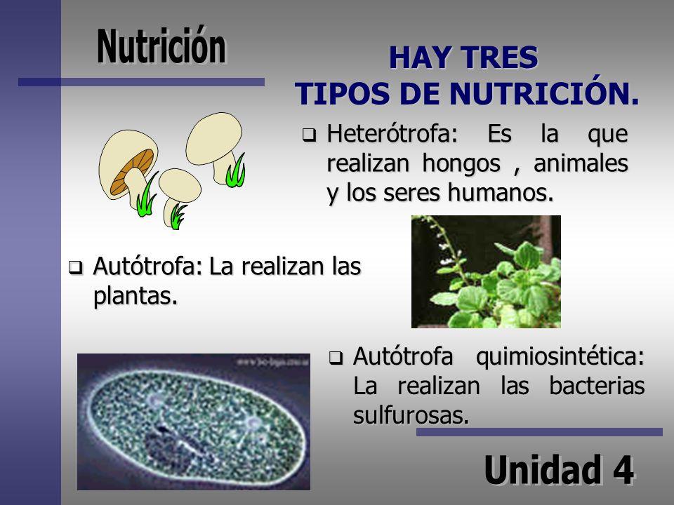 HAY TRES TIPOS DE NUTRICIÓN. Heterótrofa: Es la que realizan hongos, animales y los seres humanos. Autótrofa: La realizan las plantas. Autótrofa quimi