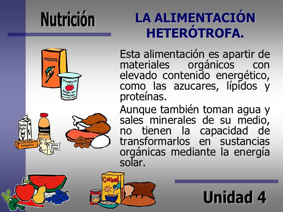 LA ALIMENTACIÓN HETERÓTROFA. Esta alimentación es apartir de materiales orgánicos con elevado contenido energético, como las azucares, lípidos y prote