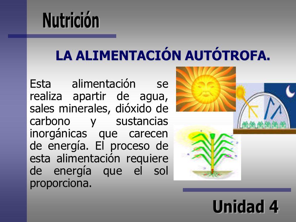 LA ALIMENTACIÓN AUTÓTROFA. Esta alimentación se realiza apartir de agua, sales minerales, dióxido de carbono y sustancias inorgánicas que carecen de e