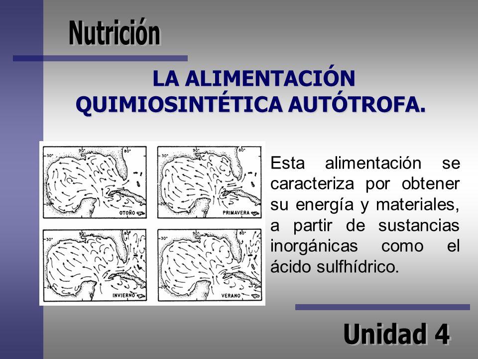 LA ALIMENTACIÓN QUIMIOSINTÉTICA AUTÓTROFA. LA ALIMENTACIÓN QUIMIOSINTÉTICA AUTÓTROFA. Esta alimentación se caracteriza por obtener su energía y materi