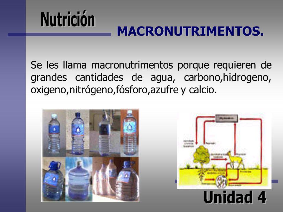 MACRONUTRIMENTOS. Se les llama macronutrimentos porque requieren de grandes cantidades de agua, carbono,hidrogeno, oxigeno,nitrógeno,fósforo,azufre y