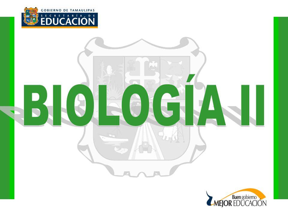 BIOLOGÍA II PRÁCTICA DE LABORATORIO: UNIDAD II.- LA CÉLULA TEMA 3.- EL CITOPLASMA SUBTEMA 2.- LOS CLOROPLASTOS Y LA FOTOSÍNTESIS FOTOSÍNTESIS, CLOROFILA, CLOROPLASTOS Y ESTOMAS