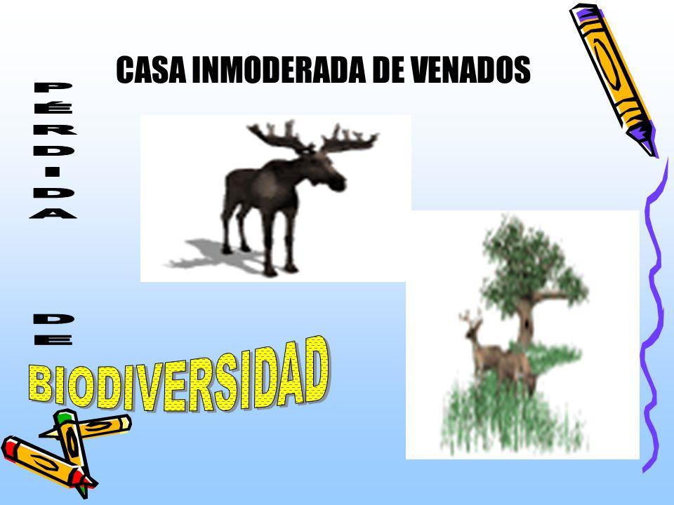 LA TALA DE ÁRBOLES PARA UBICAR UNA ÁREA DE AGRICULTURA Y GANADERÍA