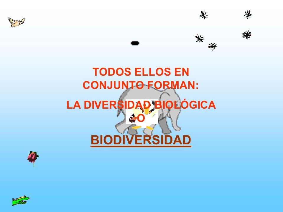 TODOS ELLOS EN CONJUNTO FORMAN: LA DIVERSIDAD BIOLÓGICA O BIODIVERSIDAD