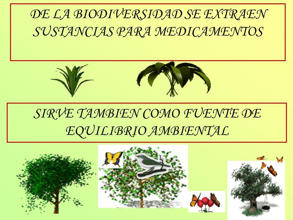 DE LA BIODIVERSIDAD SE EXTRAEN SUSTANCIAS PARA MEDICAMENTOS SIRVE TAMBIEN COMO FUENTE DE EQUILIBRIO AMBIENTAL