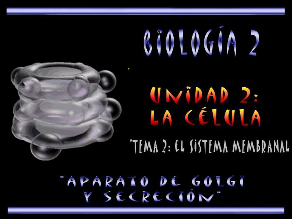 El aparato de golgi, se encuentra localizado en el citoplasma de la célula
