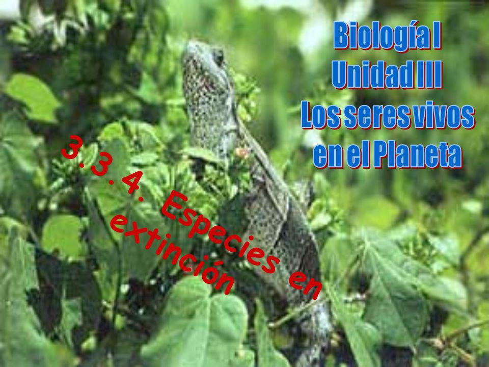 3.3.4. Especies en extinción