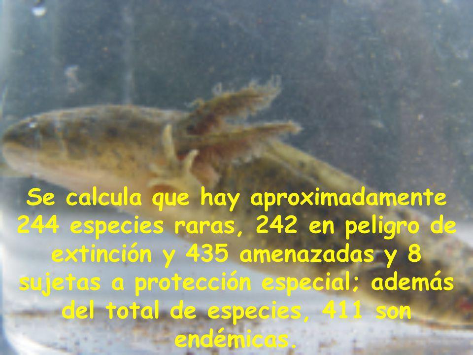 Se calcula que hay aproximadamente 244 especies raras, 242 en peligro de extinción y 435 amenazadas y 8 sujetas a protección especial; además del total de especies, 411 son endémicas.
