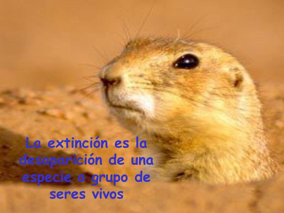 La extinción es la desaparición de una especie o grupo de seres vivos