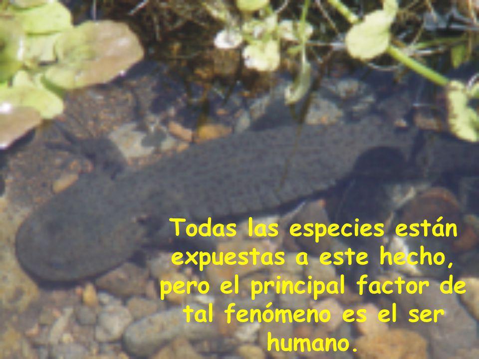 Todas las especies están expuestas a este hecho, pero el principal factor de tal fenómeno es el ser humano.