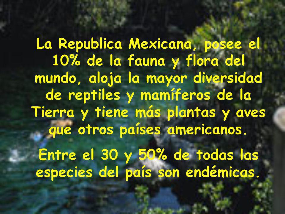 La Republica Mexicana, posee el 10% de la fauna y flora del mundo, aloja la mayor diversidad de reptiles y mamíferos de la Tierra y tiene más plantas y aves que otros países americanos.