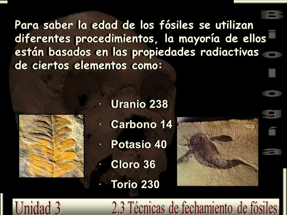 Para saber la edad de los fósiles se utilizan diferentes procedimientos, la mayoría de ellos están basados en las propiedades radiactivas de ciertos e