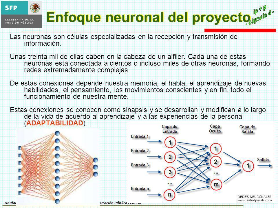 Unidad de Política de Recursos Humanos de la Administración Pública Federal Enfoque neuronal del proyecto Las neuronas son células especializadas en la recepción y transmisión de información.