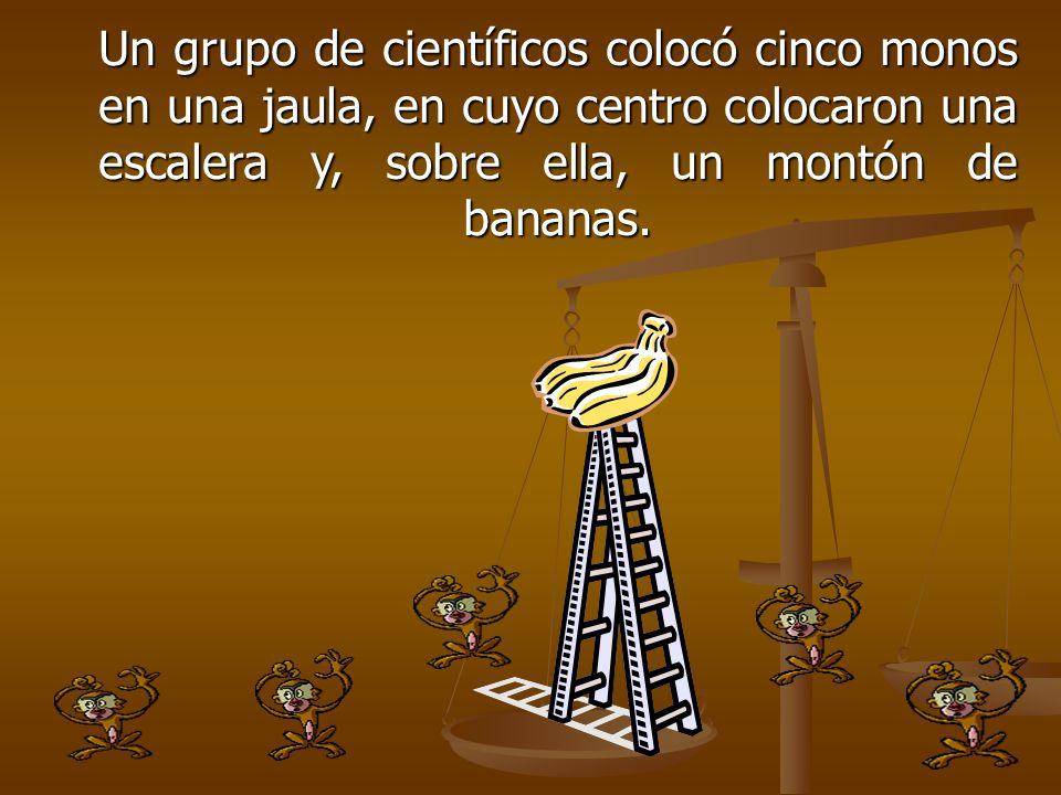 Un grupo de científicos colocó cinco monos en una jaula, en cuyo centro colocaron una escalera y, sobre ella, un montón de bananas.