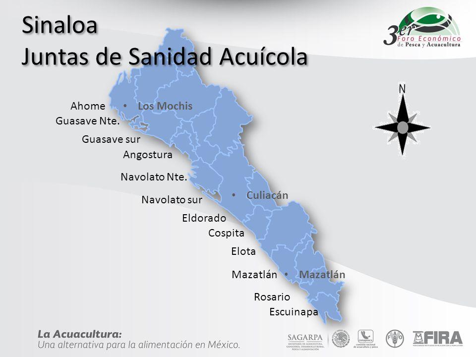 Sinaloa Juntas de Sanidad Acuícola Ahome Guasave Nte.