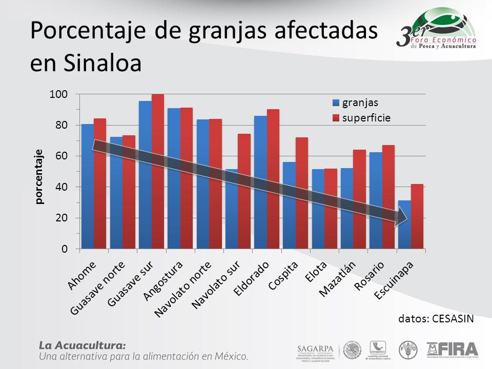 Porcentaje de granjas afectadas en Sinaloa datos: CESASIN