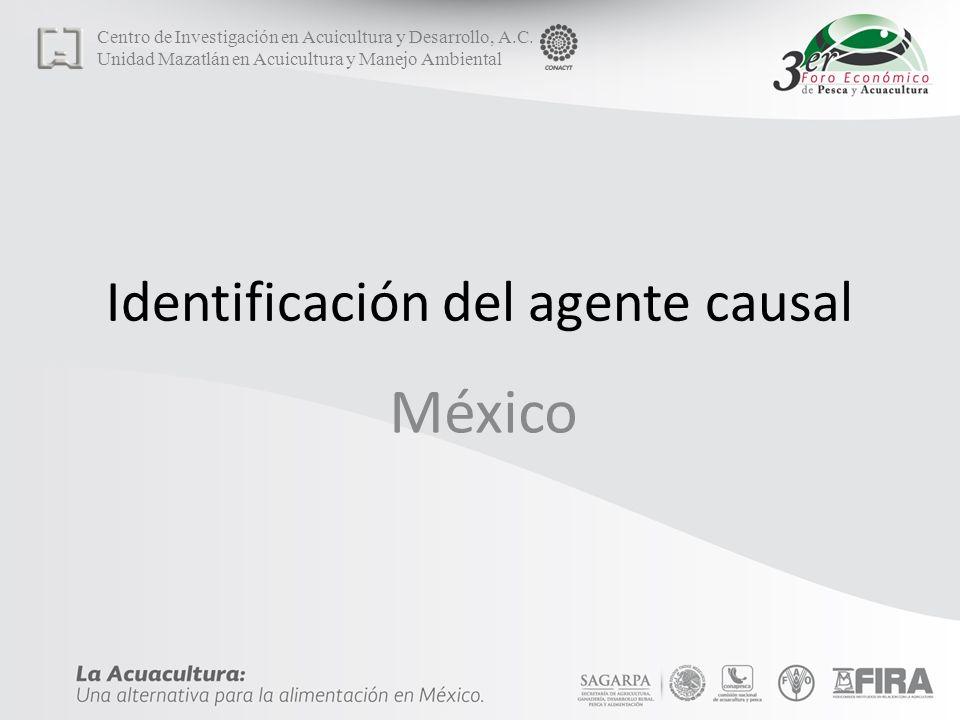 Identificación del agente causal México Centro de Investigación en Acuicultura y Desarrollo, A.C.