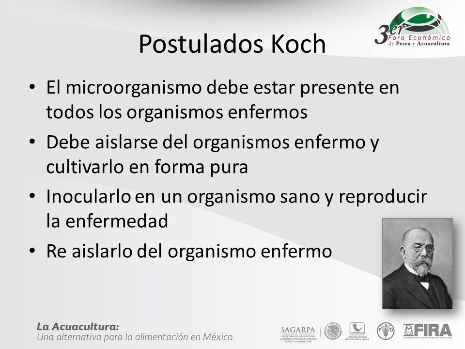 Postulados Koch El microorganismo debe estar presente en todos los organismos enfermos Debe aislarse del organismos enfermo y cultivarlo en forma pura Inocularlo en un organismo sano y reproducir la enfermedad Re aislarlo del organismo enfermo