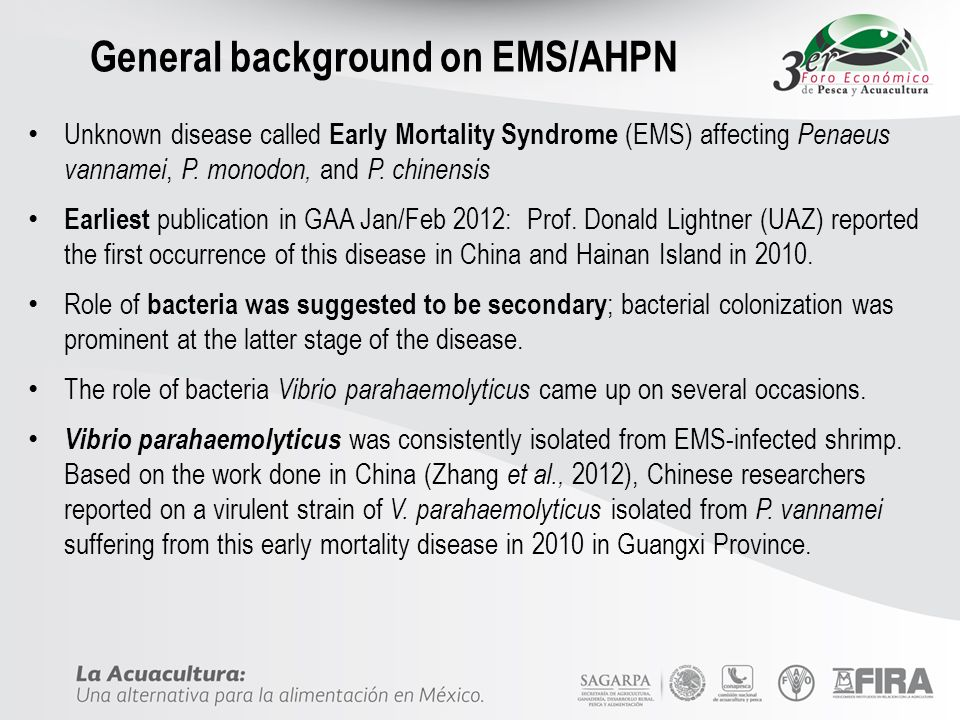 General background on EMS/AHPN Unknown disease called Early Mortality Syndrome (EMS) affecting Penaeus vannamei, P. monodon, and P. chinensis Earliest