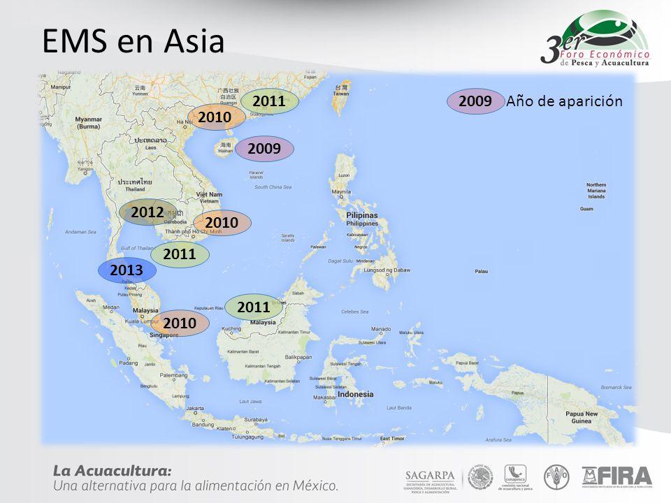 EMS en Asia 2009 2012 2013 2010 2011 2009 Año de aparición