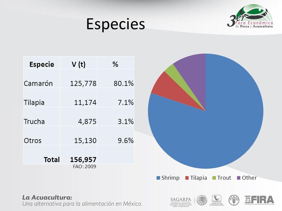 Comercio (Pesca & Acuacultura) Exportaciones (2009): – V: 802.7 Millones USD Importaciones (2009): – V: 384.6 Millones USD Usualmente ̴500 M Factor V/C (Acua.)= 3.04 Oferta per cápita : – 11.4 kg/año Consumo per cápita – 8.9 kg/año