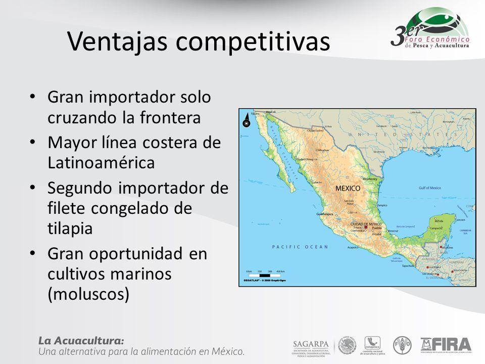 Ventajas competitivas Gran importador solo cruzando la frontera Mayor línea costera de Latinoamérica Segundo importador de filete congelado de tilapia Gran oportunidad en cultivos marinos (moluscos)