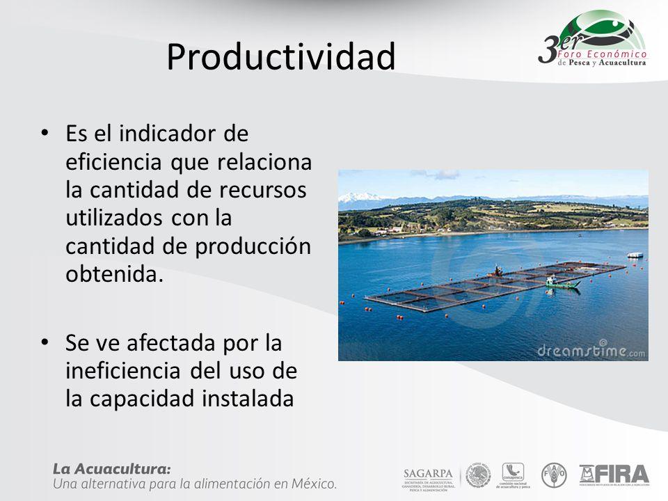 Ineficiencia Unidades productivas mal diseñadas – Algunas por abajo del punto de equilibrio de producción Falta de equipamiento – Insuficiencia de sistemas de aireación generalmente