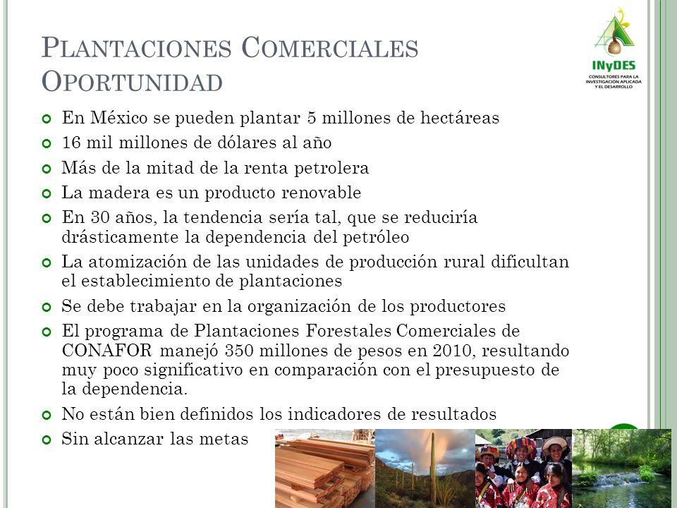 P LANTACIONES C OMERCIALES O PORTUNIDAD En México se pueden plantar 5 millones de hectáreas 16 mil millones de dólares al año Más de la mitad de la re