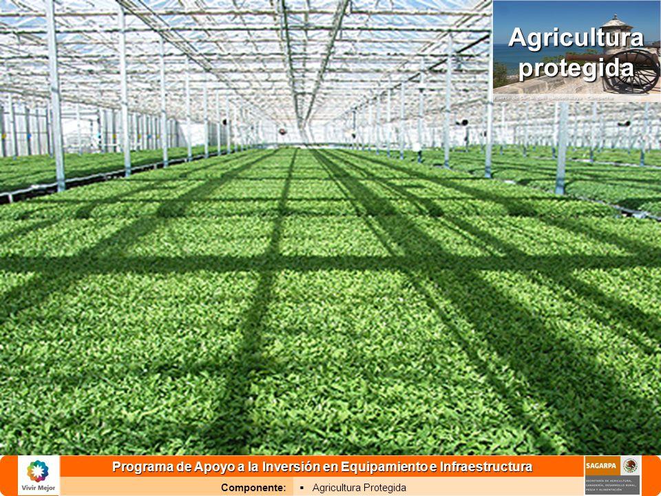 Programa de Apoyo a la Inversión en Equipamiento e Infraestructura Componente: Agricultura Protegida 2 Objetivo específico: Fomentar la producción de alimentos sanos y de calidad, con enfoque de red de valor y de manera sustentable, a través de la producción bajo agricultura protegida.